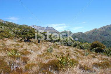 Kahurangi National Park, New Zealand Royalty Free Stock Photo