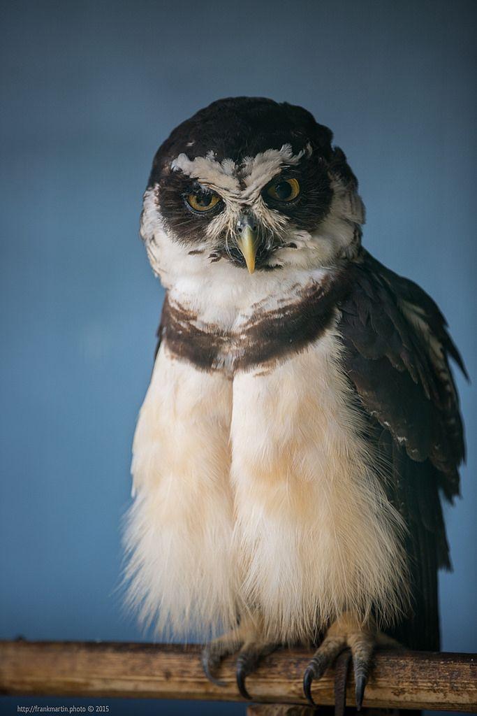 Owl https://flic.kr/p/z1995H