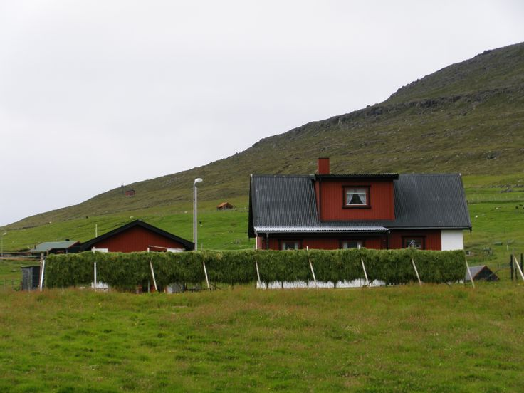 This shows cut grass hanging to dry on the island of Svínoy.