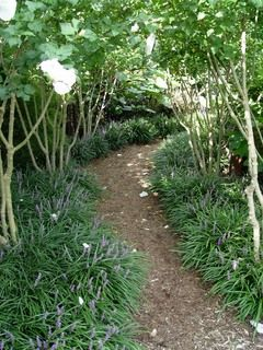 Liriope as ground cover and to edge a path. I like this amid the trees.  Would be great with crepe myrtle maybe on the easement!