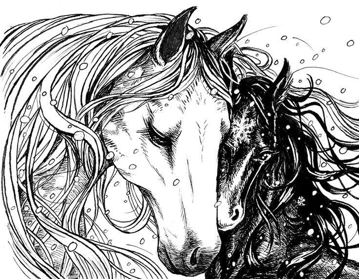 Book illustrations - by Marta Leonhardt #horses #ink #illustration
