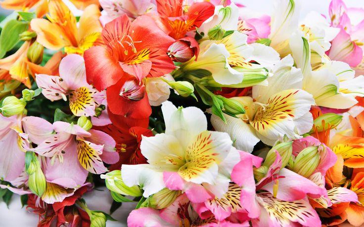 #1698122, flower category - Free desktop flower picture