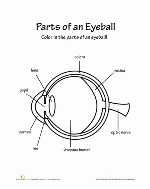 Our eyes are one of the most important parts of our body -- they allow us to see! Color in the diagram as you learn what parts make up an eye.