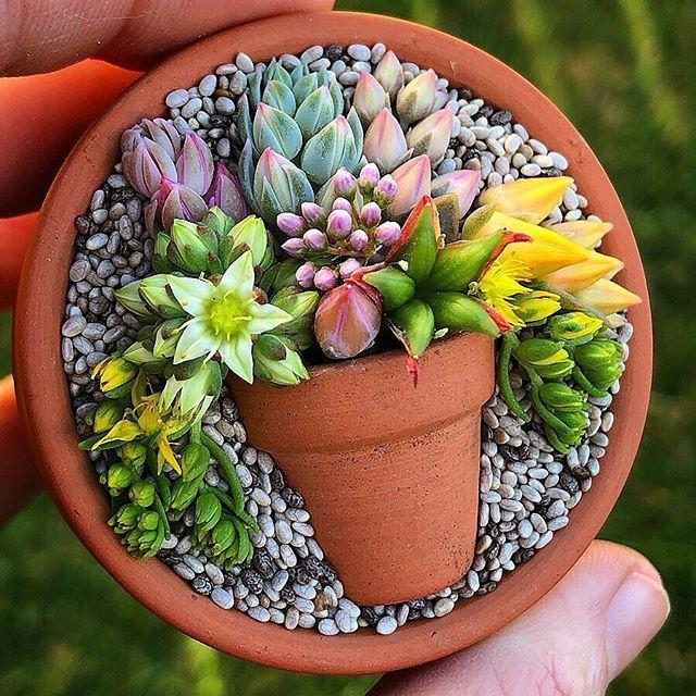 Composition De Succulente Challenge Succiepotinapot Cactus Et