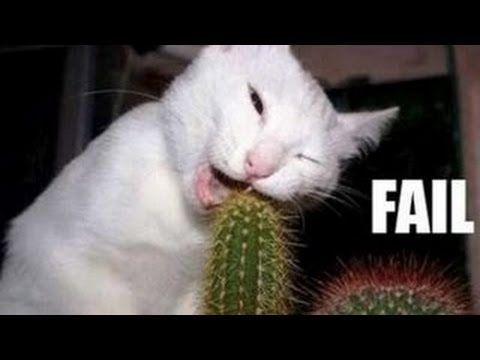 Funny cats compilation - Funny videos 2014 - Funny animals Thanks for watching, rating the video and leaving a comment is always appreciated! Please share on...