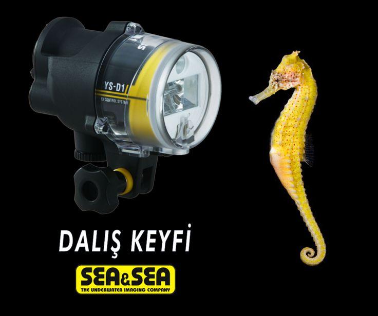 İyi fotoğraf için ışığı anlamak önemlidir. Işığınız bol olsun. Sea & Sea YS-D1 Flaş Ürünü İnceleyin ! http://www.daliskeyfi.com/seavesea-ys-d1-flas-pmu5