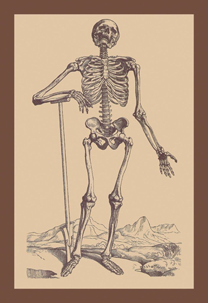 Skeleton with Shovel, by Andreas Vesalius