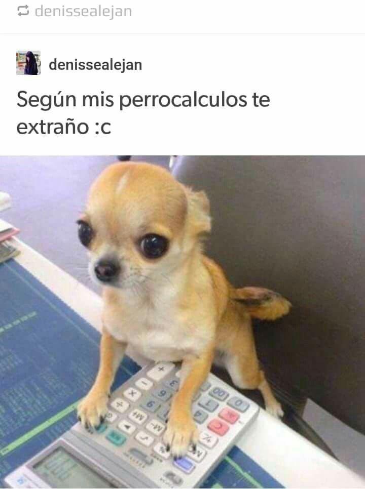 Pin De Mauricio Hernandez En Amor Cachorros Adorables Cachorros Chihuahua Cachorros
