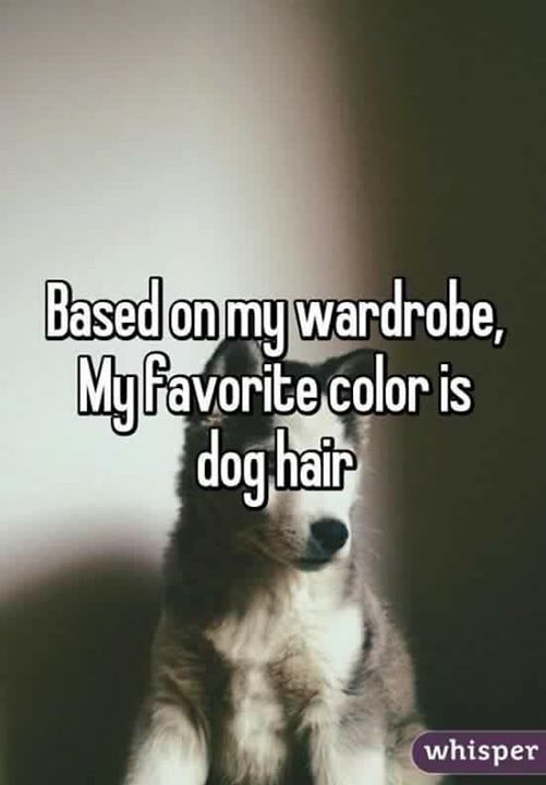 Based on my wardrobe, my favorite color is dog hair.