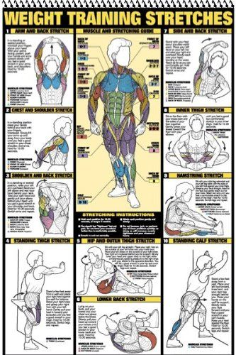 """Weight Training Stretches and more. A weight training book of 12 charts featuring: #Anatomy, #Stretching, #back, #Chest, #Leg, #Abdominal, #Triceps, #Biceps, #Forearm, #Shoulder, and Two #dumbbell workout posters. Large laminated posters in a """"flip"""" book. Can either be used together or make a great decoration for any home gym. #fitness #weightlifting #posters"""