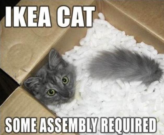 c38fa7530162e7a9ed25041fa490517e dog memes funny cat memes 177 best cat memes images on pinterest cats humour, funny,Chronic Illness Cat Meme