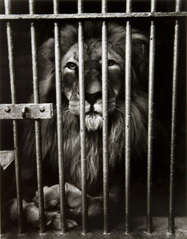 zoo i Sjælland ældrer