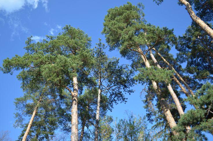 Trees in a park - Sfantu gheorghe