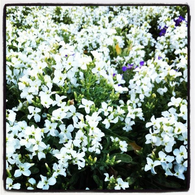 Flowers seaFlower Sea, Favorite Places