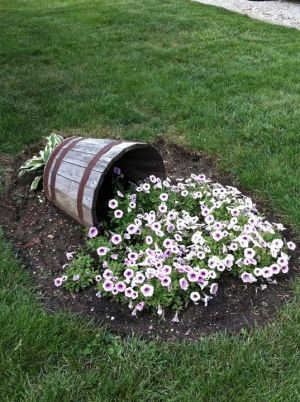 wave petunias spilling out of a barrel...... by bettye