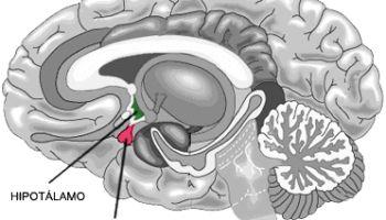 Mejora tu Fibromialgia elevando los niveles de Serotonina