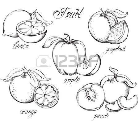 ortaggi disegno: Allegagione. Mela, limone, pompelmo, arancia e pesca. Vettore disegnato a mano. Vintage stile schizzo illustrazione.