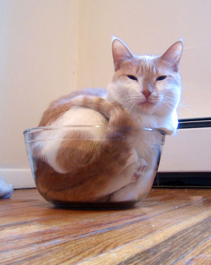 does this bowl make my butt look big?