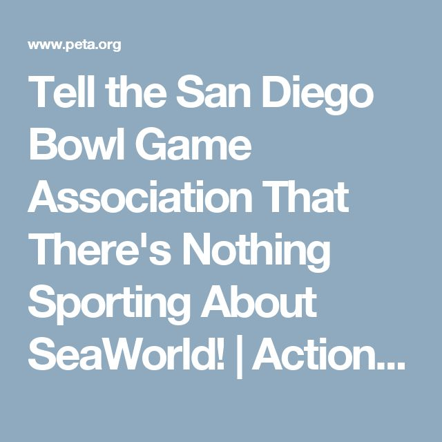 Tell the San Diego Bowl Game Association That There's Nothing Sporting About SeaWorld! | Action Alerts | Actions | PETA