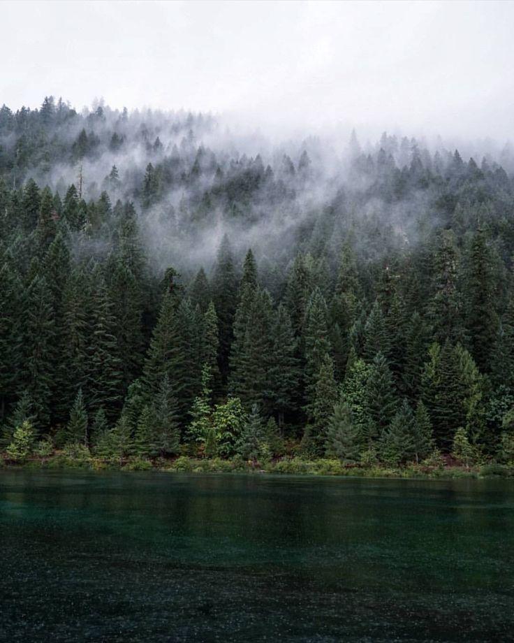 "Polubienia: 512, komentarze: 2 – @divine_forest na Instagramie: ""presents __________________________ @mannys_ventures __________________________ Thank you for…"""