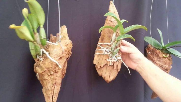 CURIOSIDADE - Vários lugares onde plantar orquídeas