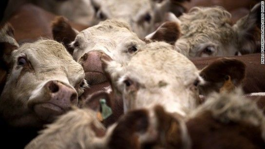 Mad cow disease-related death confirmed in Texas