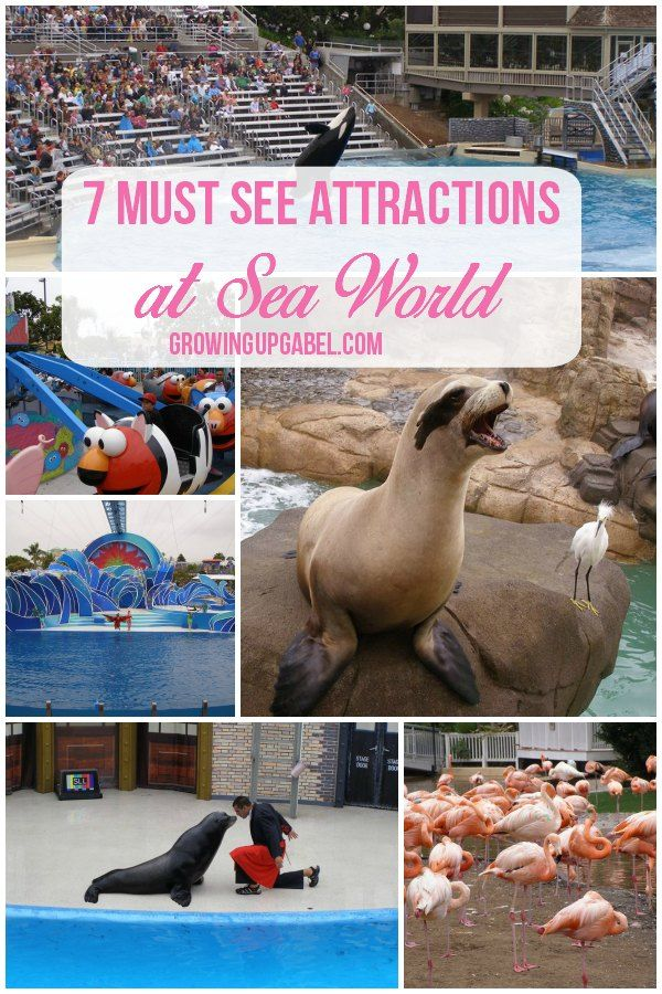 Taking the family to Sea World? Don't miss these must see shows and attractions for a great family vacation!