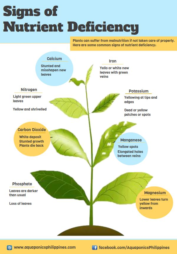 two types of plant nutrients are the macro nutrients and