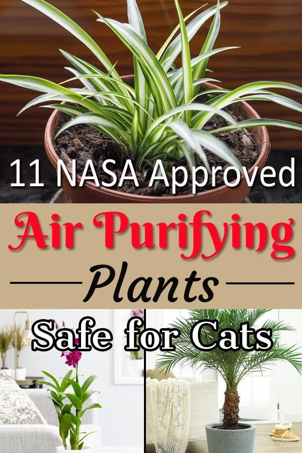 11 Nasa Approved Air Purifying Plants Safe For Cats Indoor Air Purifying Plants Plants Air Purifying House Plants
