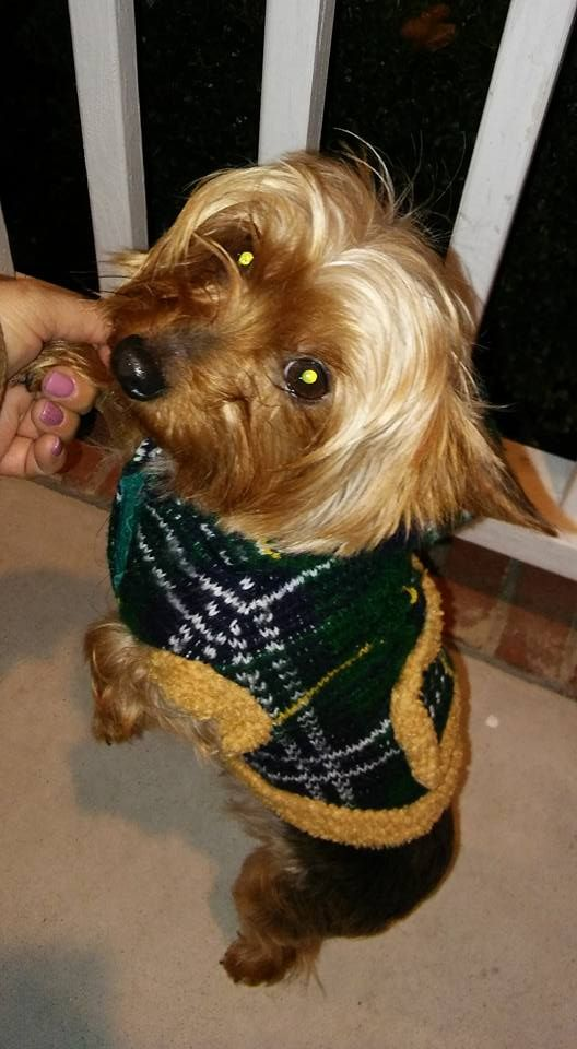 Yeika RodriguezLost & Found Dogs North Carolina Follow