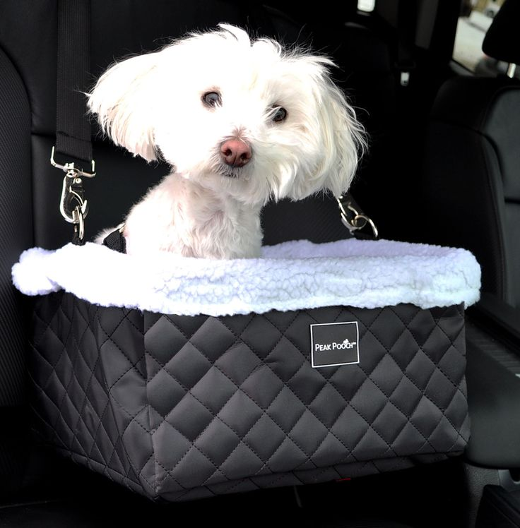 49 Best Car Seats For Small Dogs Images On Pinterest Small Dogs
