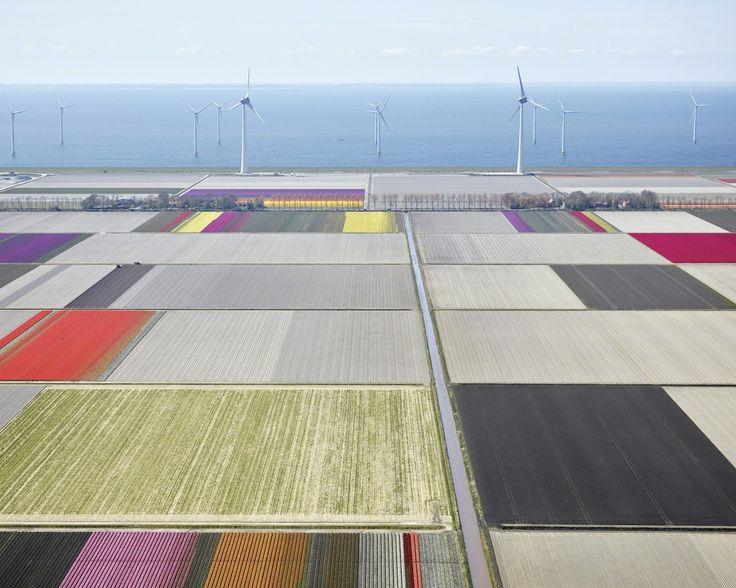 David Burdeny, 'Tulips and Turbines 2, Noordoostpolder, Netherlands', 2016