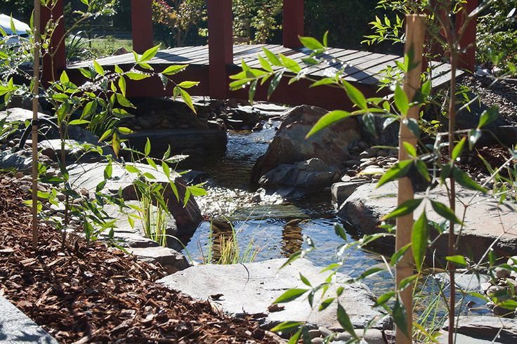 Reflection in the rocky water stream running underneath the arched timber bridge, with Nandina domestica in the foreground