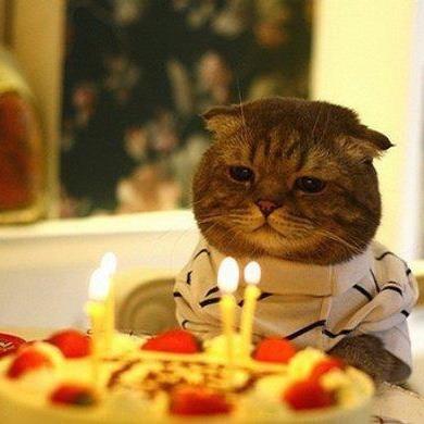Happy b-day cat