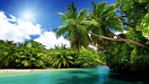 Pálmafák, Természet,pálmafák