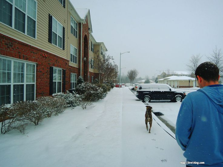 Snow in North Carolina. Snowstorm in Fayetteville.