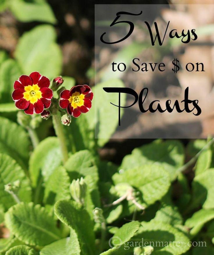 5 Money Saving Tips During Spring Planting Season