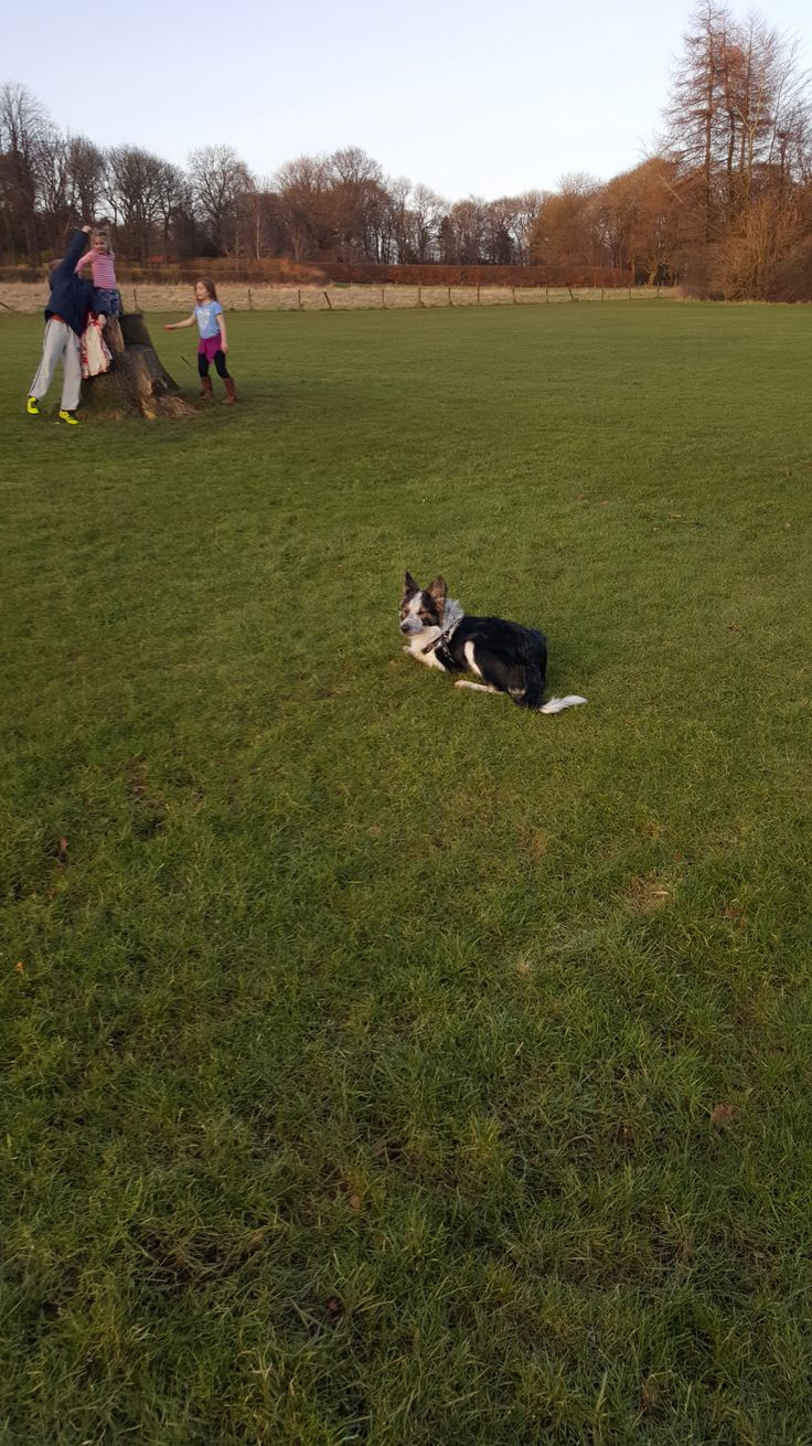 Life, problems, passion and everything in between border collie fun