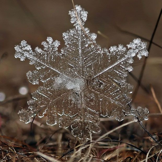 Andrew Osokin's macro photographs of snowflakes and ice formations - Telegraph