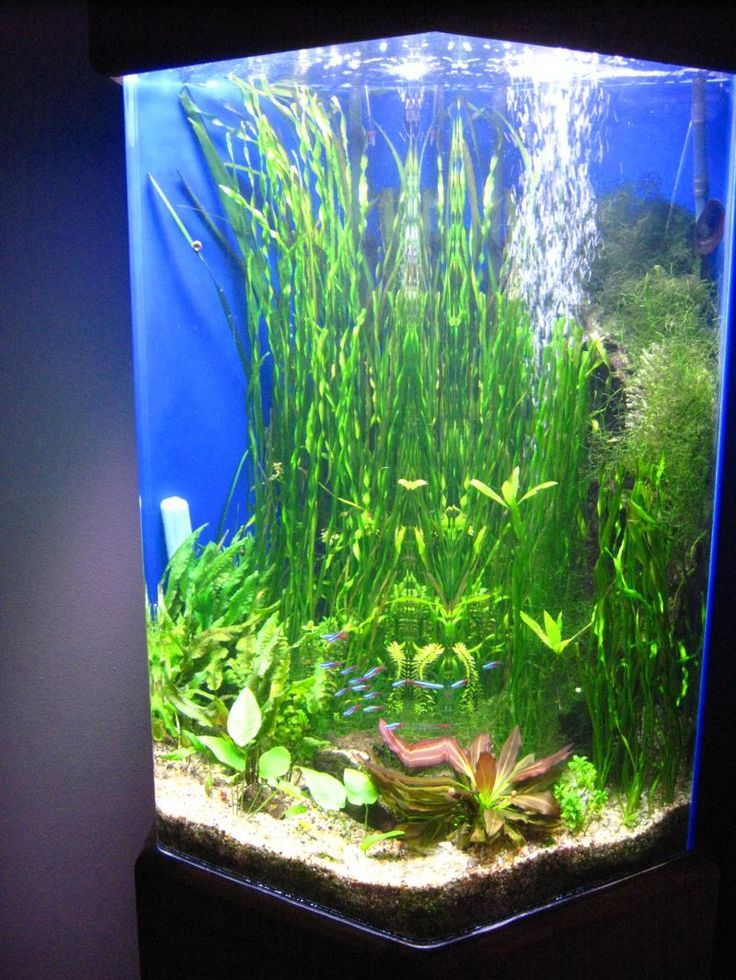 17 best images about fish on pinterest a well plants for Best water for fish tank