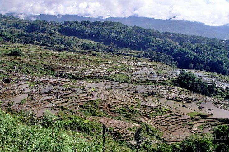 Terasy rýžových polí v kraji Tanah Toraja