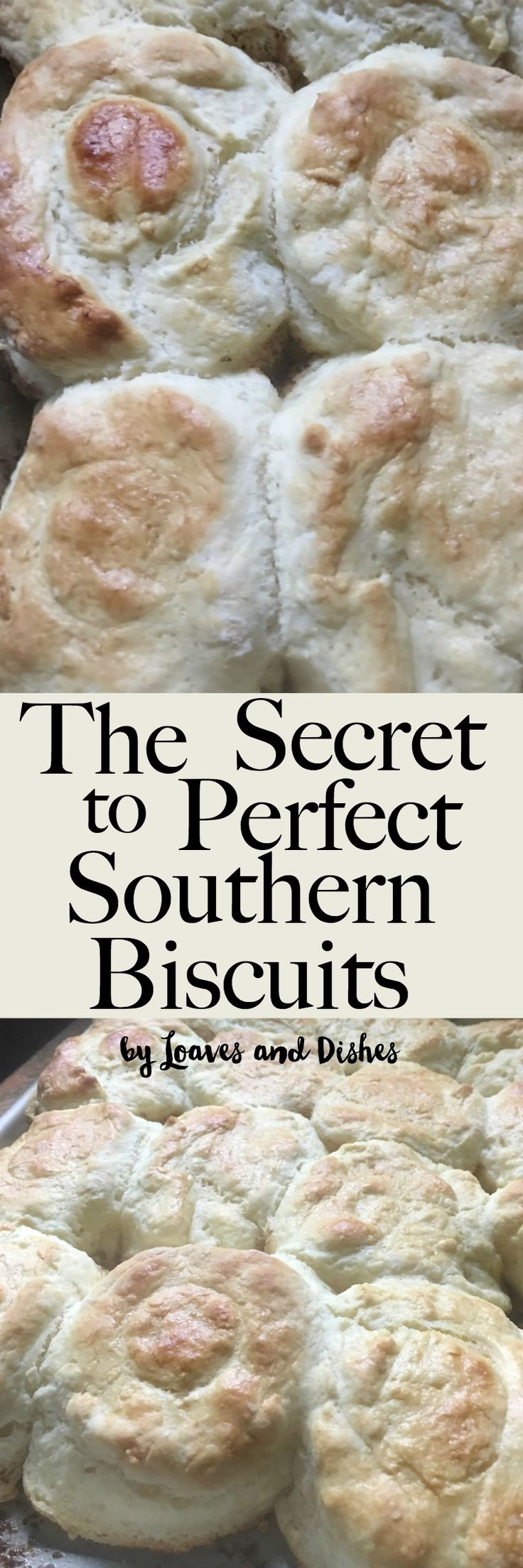 Homemade Easy Southern Biscuits made with buttermilk.  Like the Pioneer Woman or Paula Deen might make. This is the best recipe and uses self rising flour so it is all in there.  All of the steps revealed with photos and explanation. via @loavesanddishes
