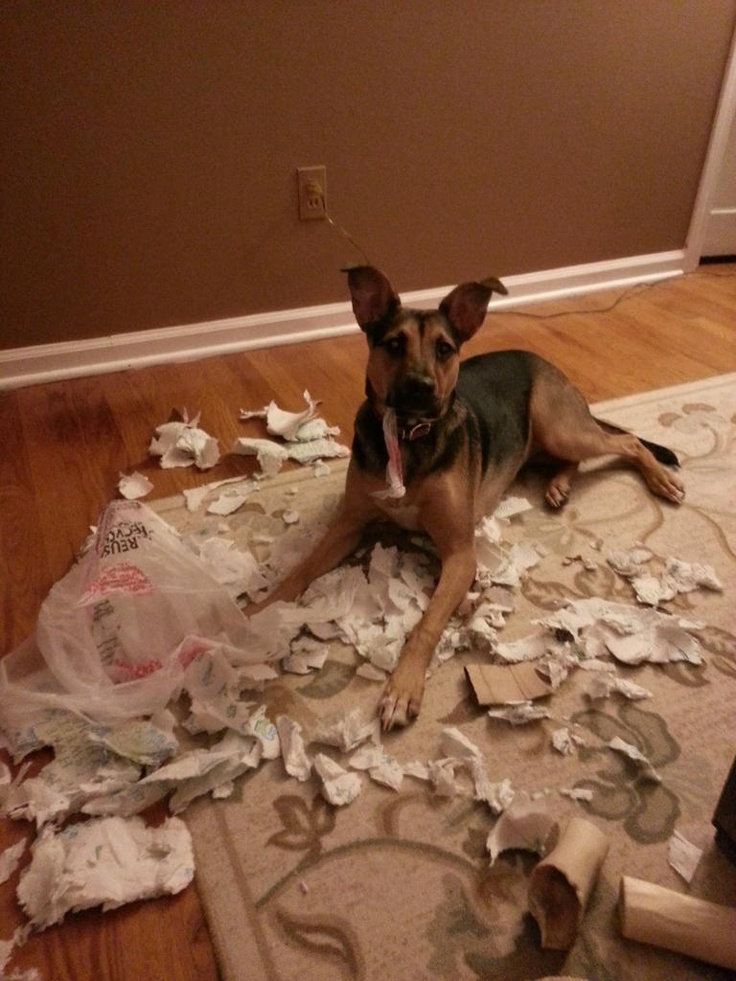hateful dog hates jay dogs forward my dog hates me the latest tweets ...