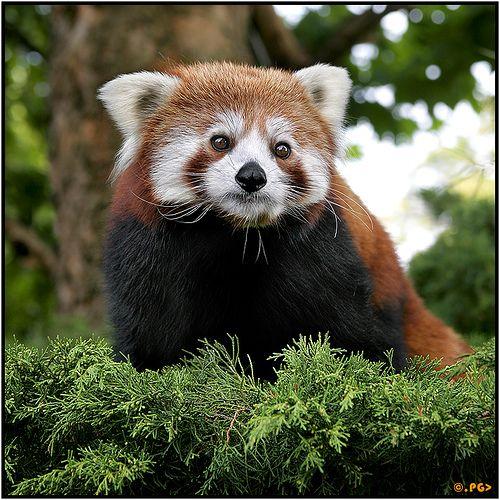 44 best images about Weird Animals on Pinterest   Madagascar ...
