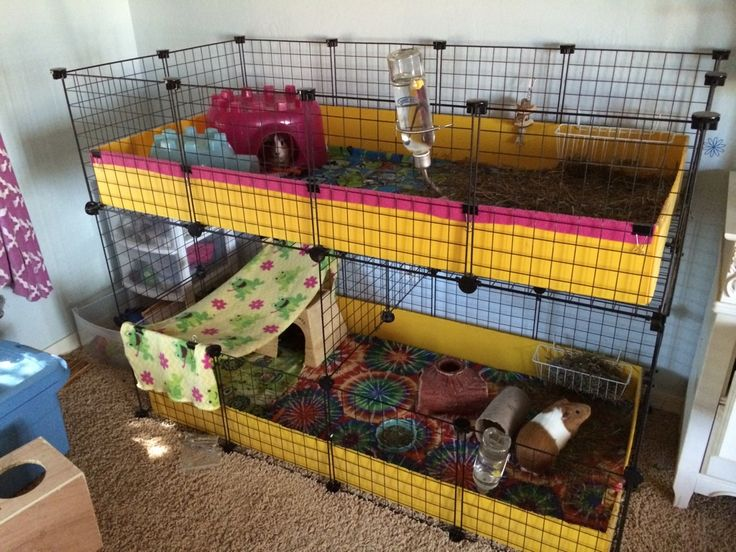 17 best images about guinea pig cage ideas cavy diy on for 2 story guinea pig cages for sale