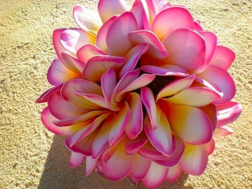 frangipani: beautiful flower found in Mombasa, Kenya