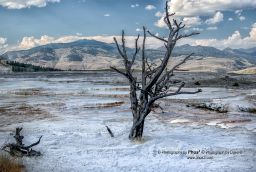 "Frozen In Time  ""Frozen in Time"" Mammoth Hot Springs, Yellowstone National Park  June 2007  If you like this Photograph you can find more here:  www.phos3.com www.facebook.com/phos3 www.PhotographybyPHOS3.etsy.com www.youtube.com/user/PhotographybyPhos3 www.twitter.com/_phos3 www.500px.com/phos3 www.flickr.com/phos3  Be sure to follow, like, and or subscribe to see what's new and to keep in touch with us."