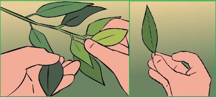1 растение вылечит сахарный диабет 2 типа, артрит, улучшит кровь и избавит от стресса! http://optim1stka.ru/2017/05/30/1-rastenie-vylechit-saharnyj-diabet-2-tipa-artrit-uluchshit-krov-i-izbavit-ot-stressa/