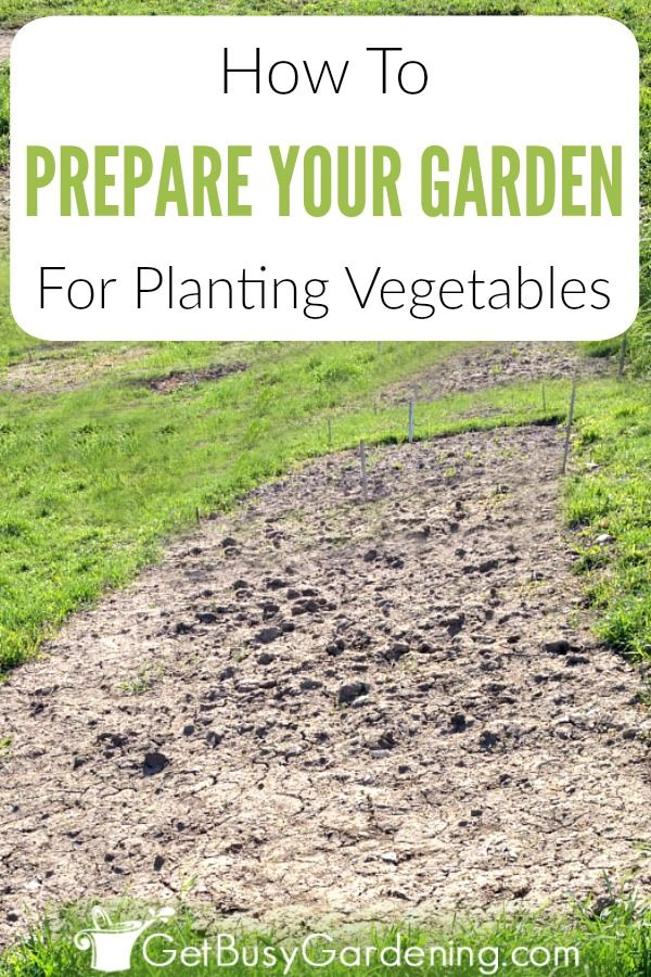 How To Prepare A Garden Bed For Planting Vegetables Garden