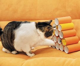 Let the Games Begin! Check out some problem-solving games that appeal to your cat's intellectual side. #meow #catgames #indoorplay